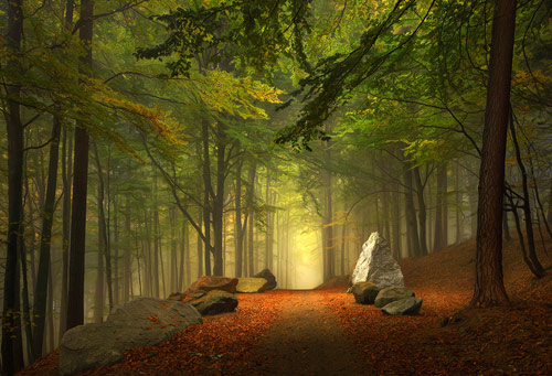 Rocky Path, Wurttenburg, Germany